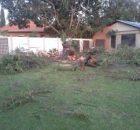 Tree Felling Pretoria - Centurion