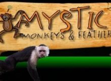 Monkey Wildlife Park - Farm Buffelsdrift Bela Bela